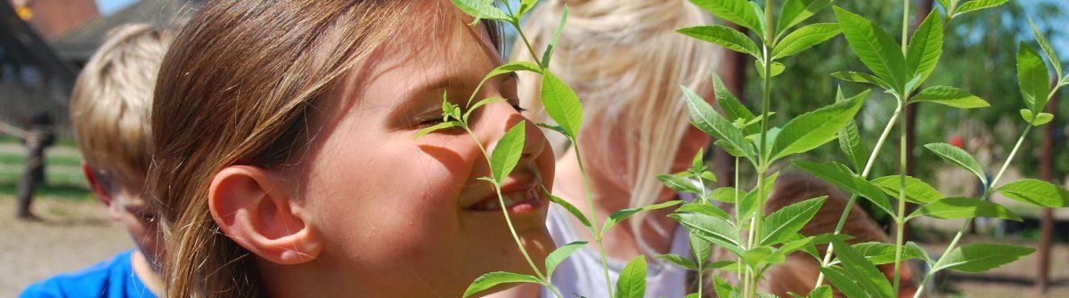 SKOLEHAVER I PRAKSIS – om haven som læringsrum