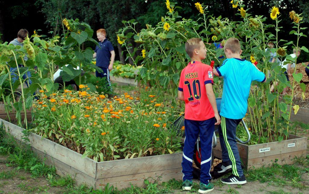 I flere år har der været venteliste på Haver til Mavers skolehave på Falen i Odense. Nu øger den nye have ved Holluf Pile Skole kapaciteten med 12 klasser. Foto: Ulla Skovsbøl.