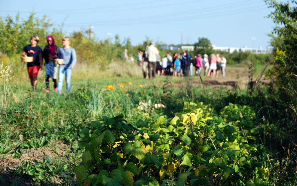 Eleverne fra Fågelskolan kommer på besøg otte gange i dyrkningssæsonen lige som i Haver til Maver. Skolen ligger lige på den anden side af vejen.
